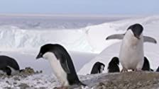 Frozen Planet Season 1 Episode 2