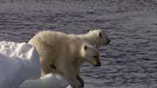 Frozen Planet Season 1 Episode 3