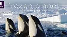 Frozen Planet Season 1 Episode 8